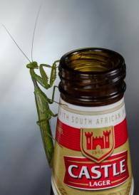 Mantis on my beer